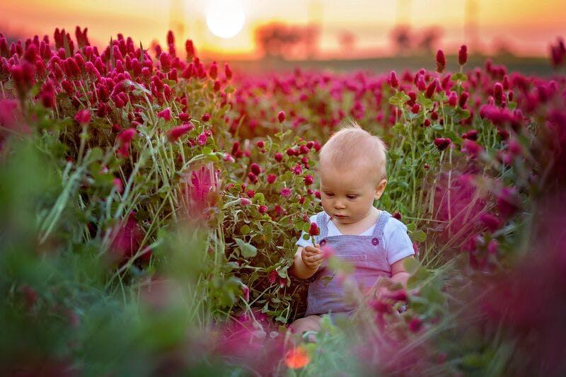 Botanical baby names.jpeg?ixlib=rails 3.0